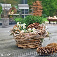 Bildergebnis Für Herbstdeko Im Garten Herbstdeko Pinterest