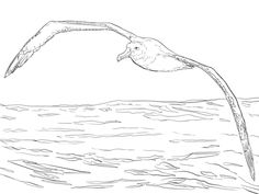I absolutely love the symbolism of albatross. They have