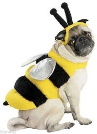 Large dog costumes, Large dogs and Bumble bees on Pinterest