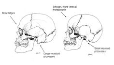 How there's a bit of Neanderthal in all of us: DNA link to