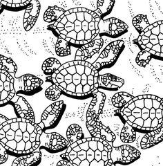 Sea turtles, Turtles and Turtle pattern on Pinterest