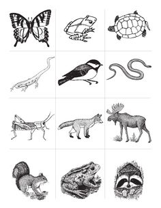 1000+ ideas about Animal Classification Activity on