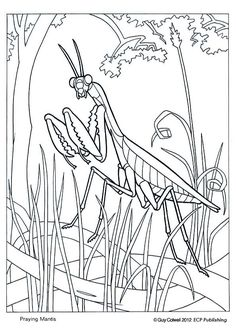 Praying mantis pattern. Use the printable outline for