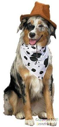 Amazon.com: Paper Magic Group Dog Riders Cowboy Pet ...