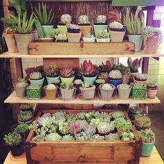 Indoor Cactus Garden Greenhouse Dreams Pinterest Gardens