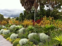 Native Australian Garden Inspiration In Contrast To Other Parts