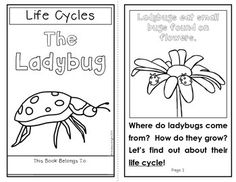 {FREE} Printable Parts of a Ladybug Activity and other