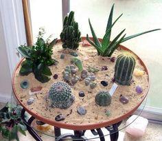 Indoor Cactus Garden Ideas Mark Saidnaweys Gardening Ideas