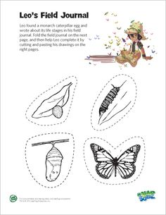 free printable worksheets on the life cycle of a butterfly