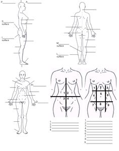 1000+ images about Anatomy and Physiology on Pinterest