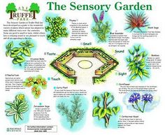 A Sensory Garden Links To Good List Of Plants School Ideas
