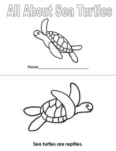 Labeling activities (blog post) for a sea turtle diagram
