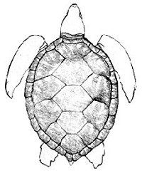 1000+ images about Line Drawings for Literacy on Pinterest