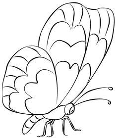 http://zonapellucida.files.wordpress.com/2012/01/butterfly