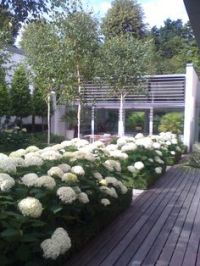 back yard on Pinterest | Tuin, Buxus and Hedges