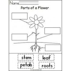 1000+ ideas about Kindergarten Lesson Plans on Pinterest