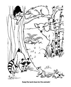 Printable Pond Habitat Coloring Page Sketch Coloring Page