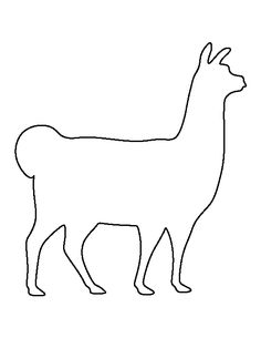 Tici Llama comes from Peru in South America. Llamas are