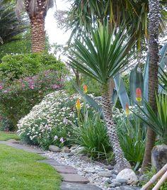 SC Native Plant Yucca Gloriosa Spanish Bayonet People Pest