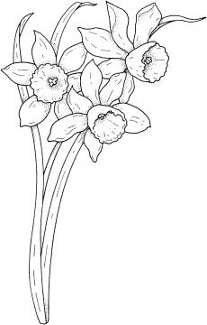 Click to see printable version of Lily Of The Valley 4