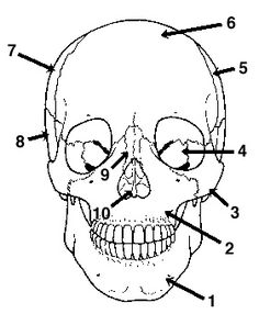1000+ images about Anatomy and Physiology HELP on