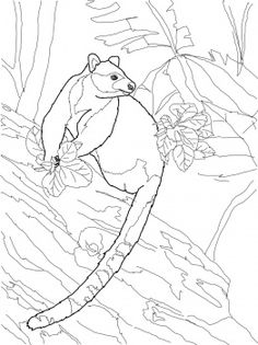 1000+ images about Tree Kangaroo for Kids on Pinterest