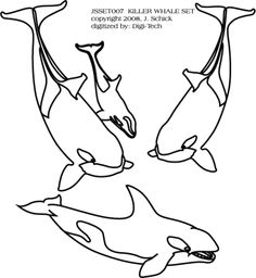 Killer whales, Worksheets and Whales on Pinterest