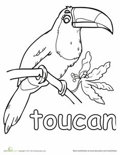 1000+ images about Toucan classroom ideas on Pinterest