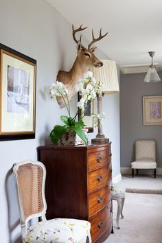 1000 Images About Decorating Around Taxidermy On
