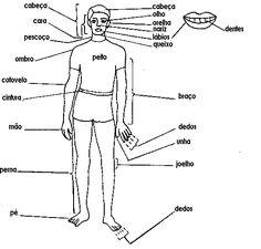 English worksheet: Hospital / medical: internal organs