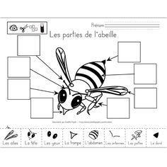L'ABEILLE : FICHIER LECTURE / VOCABULAIRE et activités