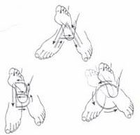 Ankle anatomy, Muscle and Foot anatomy on Pinterest