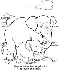 Design, Elephant nursery and Ears on Pinterest