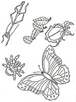 Detailed coloring pages of rain forest images. Color & cut
