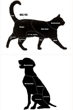 1000 images about animals are cuuuute :3 on Pinterest | Emu war, Venn diagrams and Cats