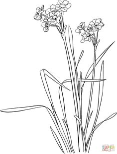1000+ images about Flowers drawing of daffodil on