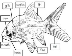 Free pdf: worksheet to graph colored goldfish. Located at