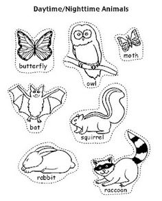 Nocturnal and Diurnal Animal Sort is a simple cut and
