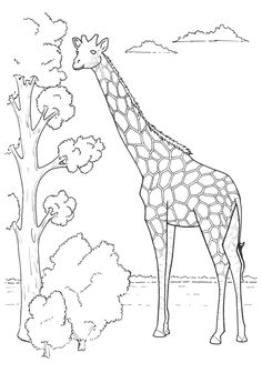 Giraffe color page, animal coloring pages, color plate