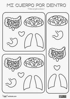 actividades para enseñar el sistema circulatorio en el