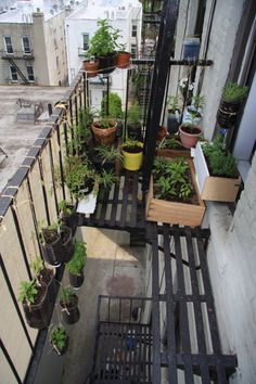 9 Fire Escape Gardens That Will Inspire You To Make Your Own