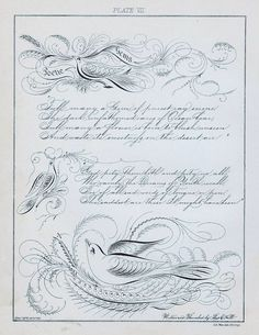 1000+ images about Calligraphic Drawings on Pinterest