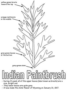 The Legend of the Indian Paintbrush!! I heart this book