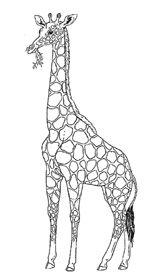 savanna grasslands VBS wild animals on Pinterest