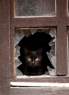 A cat peers through a broken window