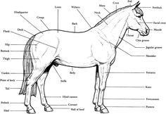 1000+ images about Horse Activities For Kids on Pinterest