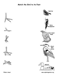oology Science Project six different types of birds feet