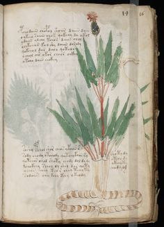 1000 Images About The Voynich Manuscript Mystery On