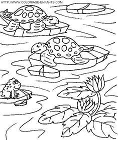 Thema schildpadden kleuters / Turtles theme preschool on