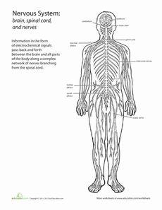 1000+ images about Edu Nervous System on Pinterest